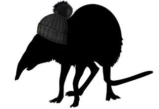 The Tuque'd Shrew